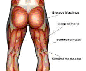 Travis Hansen, Hip exercises